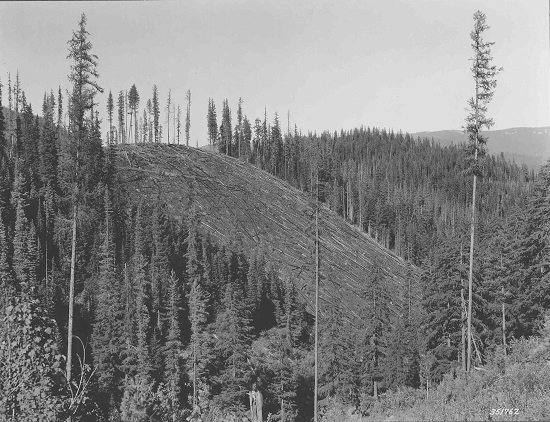 Black and white photo of logging operation in Deception Creek