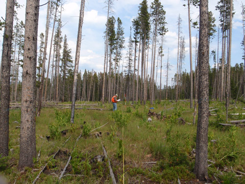 Photo of sampling being conducted at Tenderfoot Creek Exp Forest