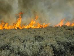 sagebrush burning